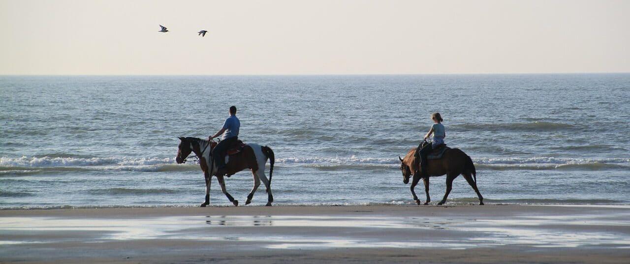 Randonnées à cheval en Bretagne Sud