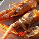 Langoustines pêchées en Bretagne