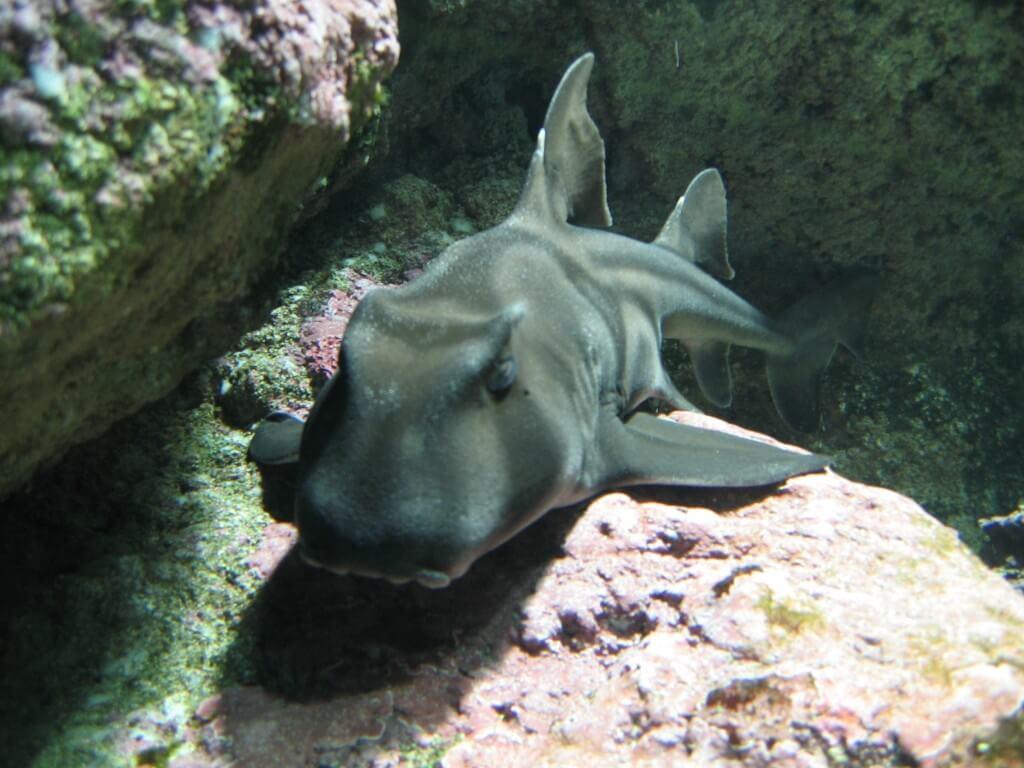 Aquarium d'Océanopolis à Brest