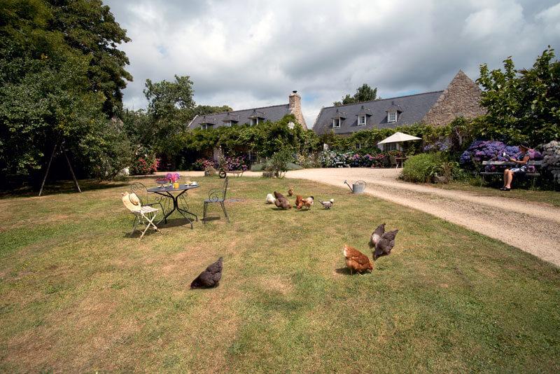 Vue extérieure ferme de Kerscuntec poules parasol pelouse