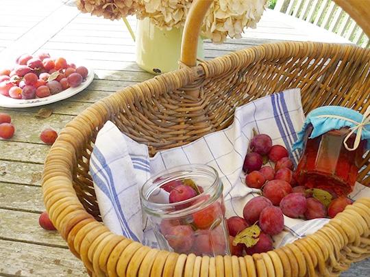 confiture de prunes maison à la ferme de kerscuntec